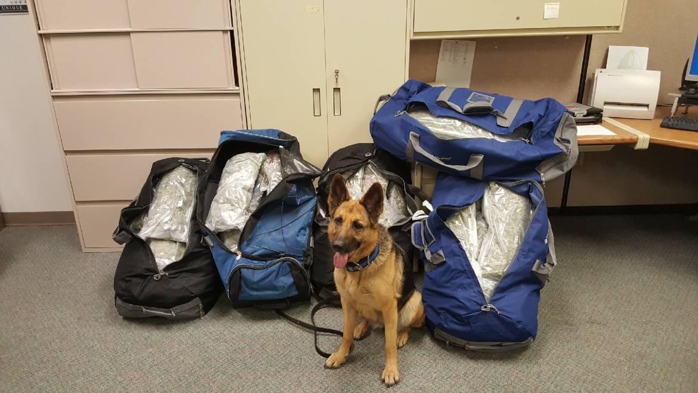 Canine Officer Bella Retires